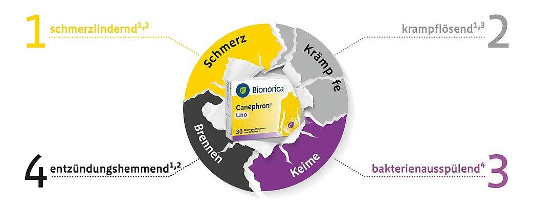canephron antibiotikum A prosztatitis befolyásolja az embert a meddőségben